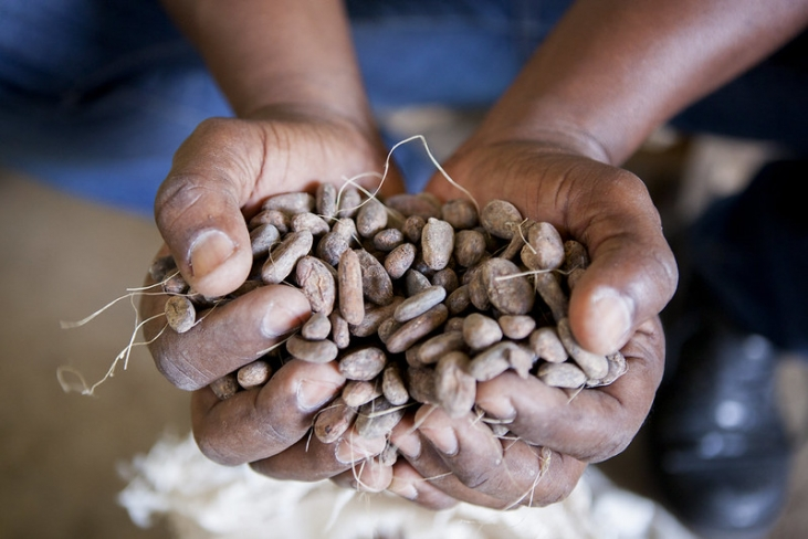 Conférence au Salon du chocolat : en Haïti, redonnons la vie à nos parcelles cacaoyères Image principale