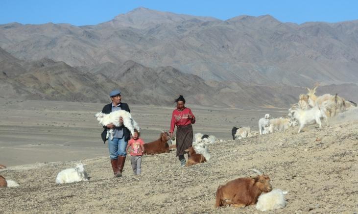 Mongolie : la première filière de cachemire au monde Image principale