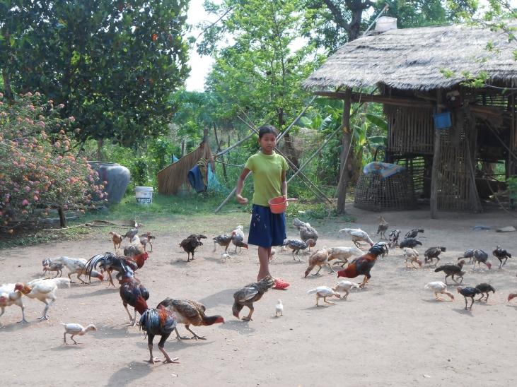 Cambodge : application concrète de l'approche 'One Health', une seule santé Image principale