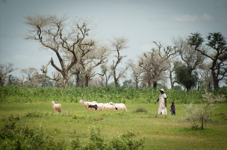Sénégal : La société civile s'engage pour la promotion d'un modèle agricole durable Image principale