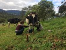 Colombie : Valoriser les remèdes traditionnels vétérinaires Vignette