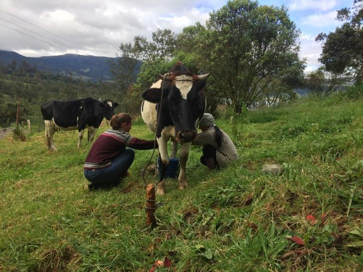 Colombie : Valoriser les remèdes traditionnels vétérinaires Image principale