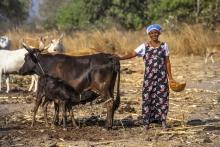 Les femmes paysannes: actrices essentielles du développement de leur pays Vignette