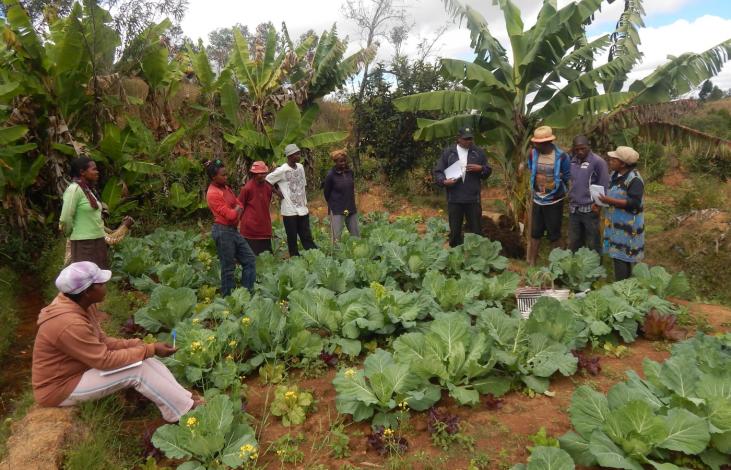Madagascar : déployer des alternatives aux pesticides  Image principale