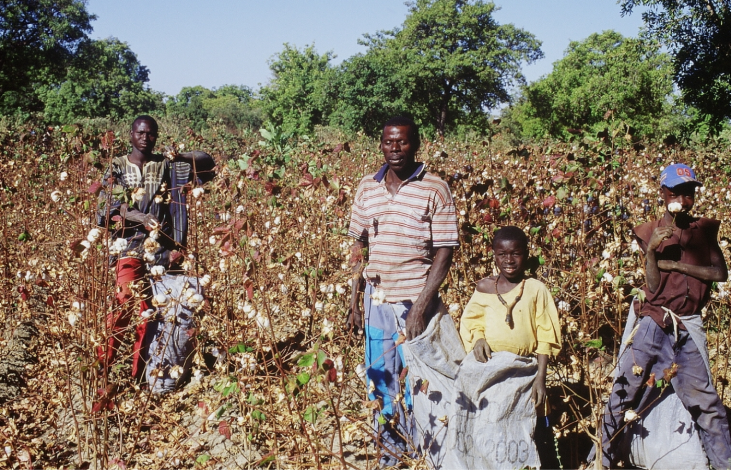 Coton et agroécologie au Mali Image principale
