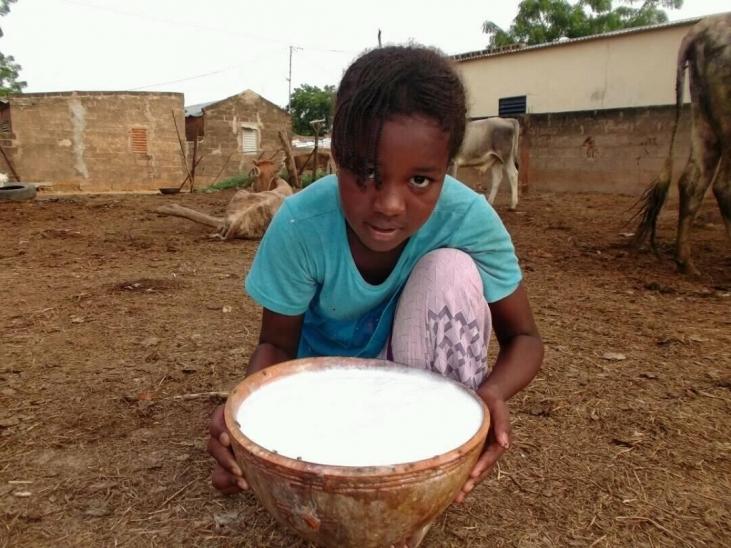 Sénégal : la fondation Bel accompagne AVSF dans l'appui à la filière laitière locale Image principale