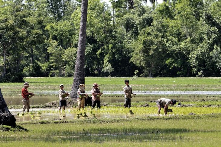 Relier les petits producteurs cambodgiens de sucre de palme et de riz au marché français Image principale