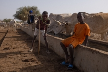 Thiellal : rendre concret le concept « One Health » dans les territoires de Haute Casamance Vignette