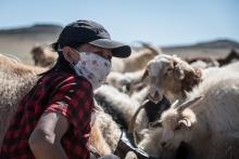 Urgence Mongolie : aidez les éleveuses à surmonter les crises Vignette