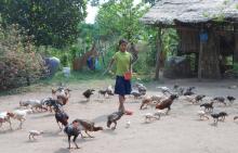L'approche « Une seule santé  » au Cambodge Vignette