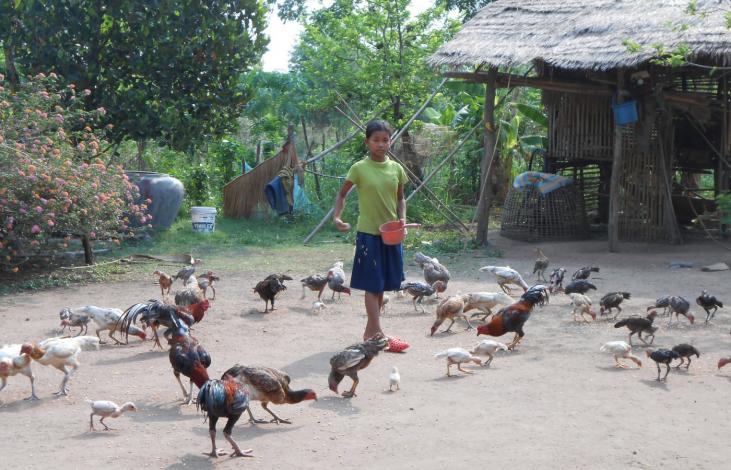 L'approche « Une seule santé  » au Cambodge Image principale