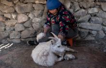 Du textile durable certifié en Mongolie Vignette