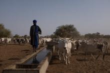 Sénégal : lutte contre la déforestation et appui au patoralisme dans le Ferlo Vignette