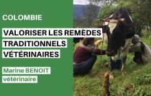 Valoriser les remèdes vétérinaires traditionnels Vignette