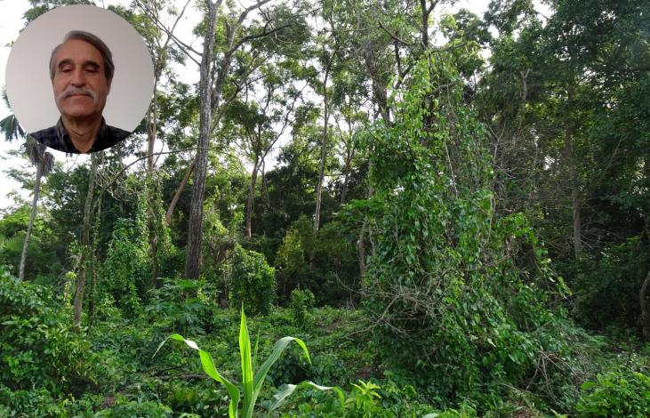 La parole à Christian Castellanet : Protéger la forêt, un objectif au service du collectif et de l'individu Image principale