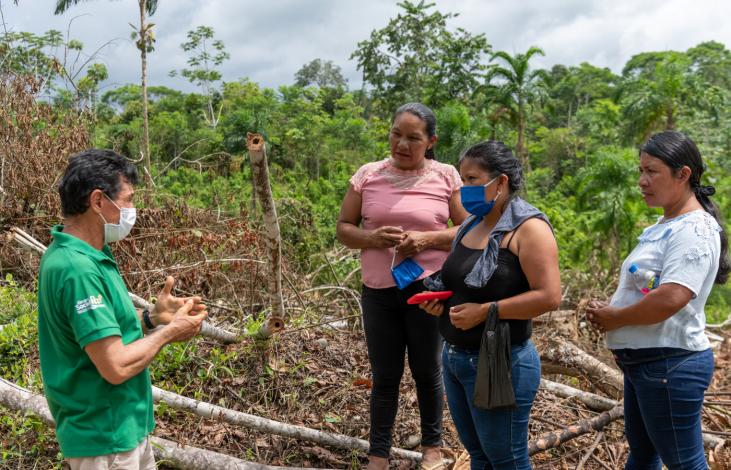 Concilier protection des forêts et développement économique  Image principale