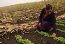 Regional: El acceso al trabajo, el empleo y la educación como derecho de las poblaciones rurales Vignette