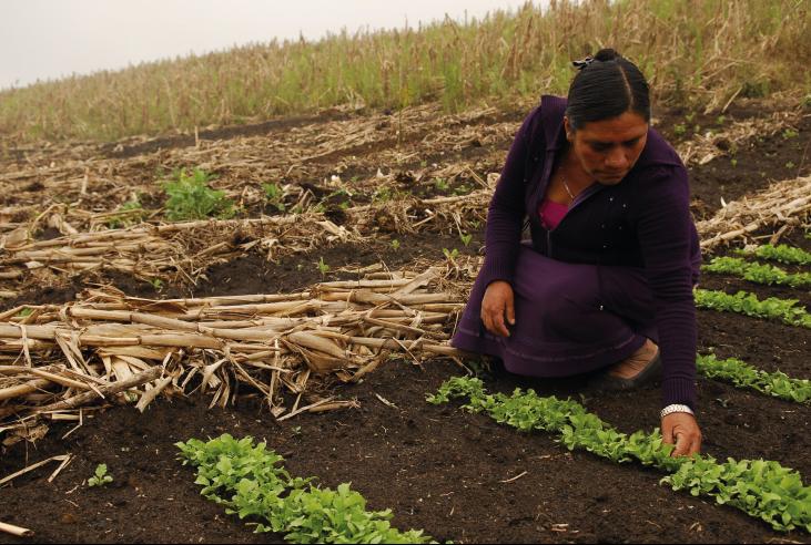 Regional: El acceso al trabajo, el empleo y la educación como derecho de las poblaciones rurales Image principale