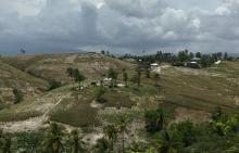 Séisme en Haïti: l'ONG AVSF prête à intervenir auprès des familles paysannes  Vignette