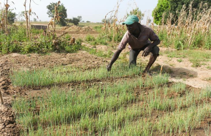 Comment AVSF préserve la biodiversité avec l'agroécologie ? Image principale