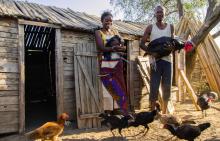 Signez le manifeste d'AVSF pour un élevage qui prend soin de notre santé et de notre planète.  Vignette
