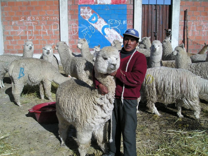 Elevage d'alpacas à Cusco au Pérou Image principale