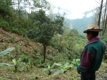 Défense du territoire indigène Ixil au Guatemala Vignette