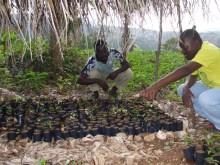 Reboisement et biodiversité dans le Sud-est d'Haïti Vignette