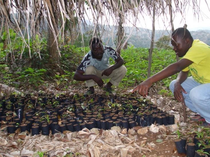 Reboisement et biodiversité dans le Sud-est d'Haïti Image principale