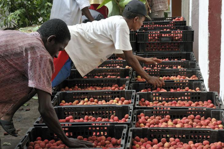 Commerce équitable de vanille, litchis et épices à Madagascar Image principale