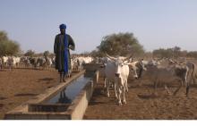 Pastoralisme et lutte contre la désertification au Nord Sénégal Vignette