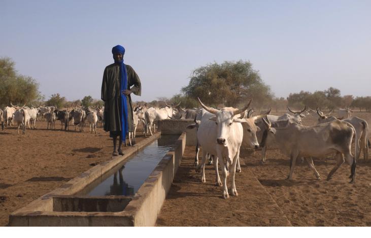 Pastoralisme et lutte contre la désertification au Nord Sénégal Image principale