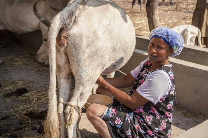 Production laitière paysanne au Sud Sénégal Image principale