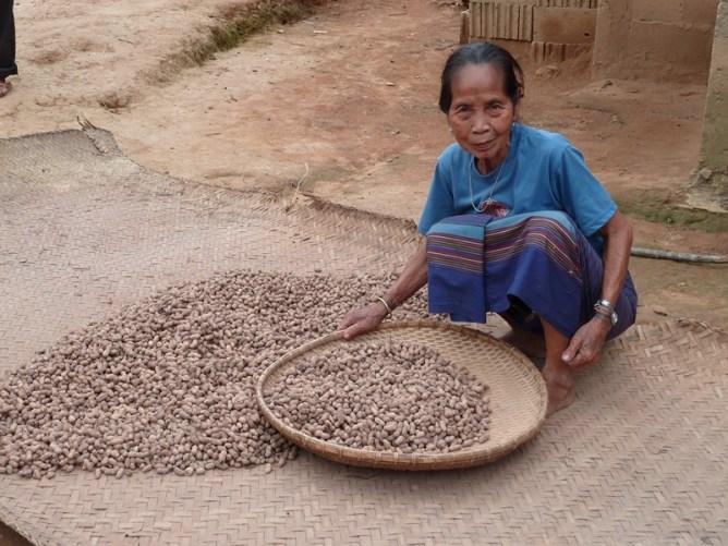 Biodiversité et sécurité alimentaire au Nord Laos  Image principale