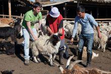 L'élevage comme seule ressource en Mongolie Vignette