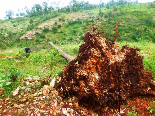 Cyclone Sandy en Haïti  (3) ©SOS Enfants sans Frontières.JPG