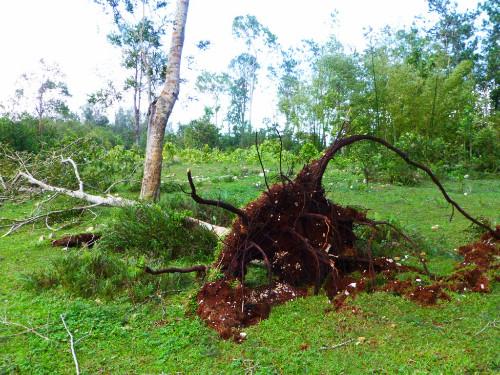 Cyclone Sandy en Haïti  (4) ©SOS Enfants sans Frontières.JPG