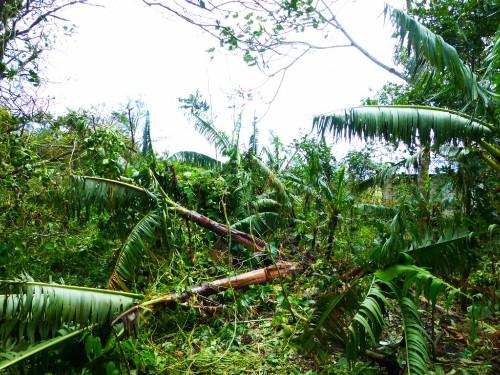 Cyclone Sandy en Haïti  (6) ©SOS Enfants sans Frontières.JPG