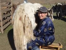 La cooperativa de los ganaderos de yaques en Mongolia Imagen